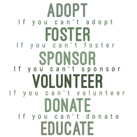infographic: adopt. if you can't adopt, foster. if you can't foster, sponsor. if you can't sponsor, volunteer. If you can't volunteer, Donate. if you can't donate, educate.