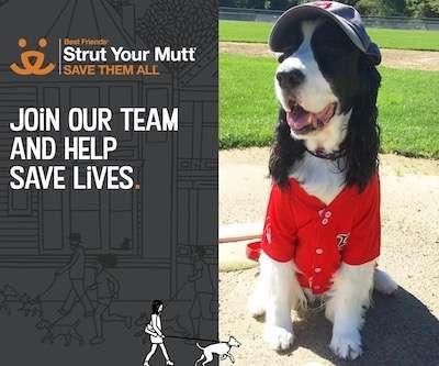 Strutt Your Mutt Logo