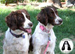 Blue Belle (left) and Spoti