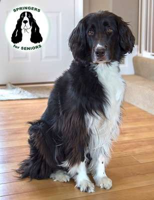 Midwest - English Springer Rescue America