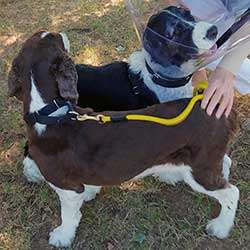 ESRA Special Needs dogs Billy and Bonnie reunited after Billy's successful surgery