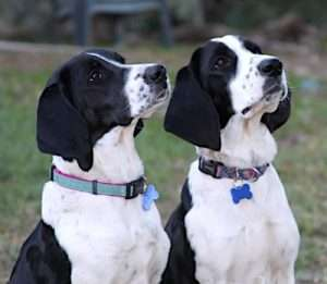 Louie, left, and Roxie