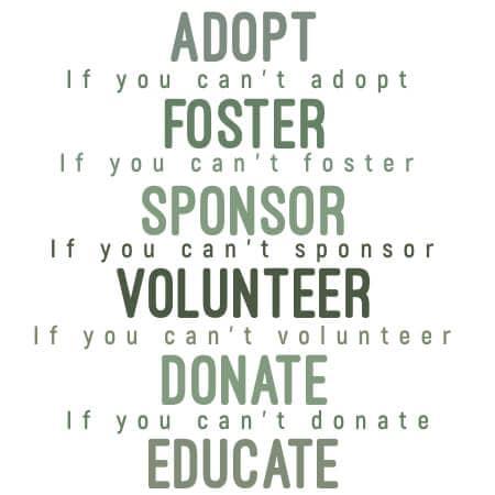 ESRA-Adopt-Foster-Vol