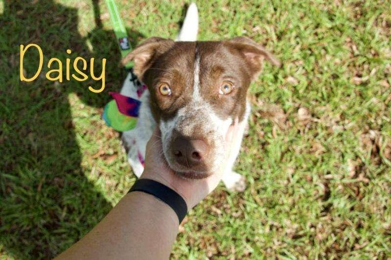 Daisy in Jackson, MS