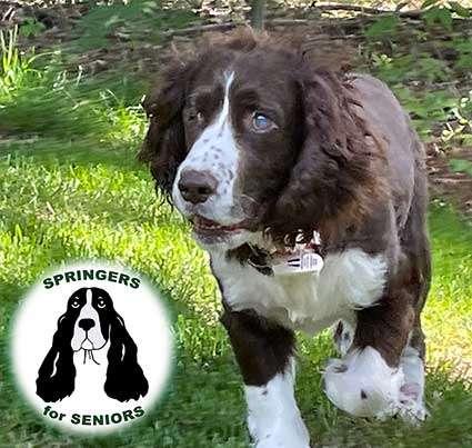 Robert with Springer for Seniors logo
