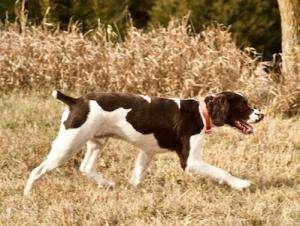 Oakley chase