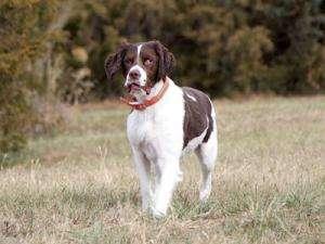 Oakley in field