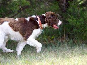 Oakley runs